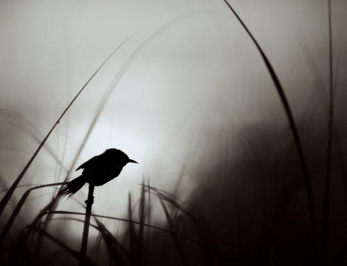 Benchmark Retirement Fund – Early Bird 2021-04